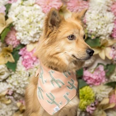 A dog wearing a scarf