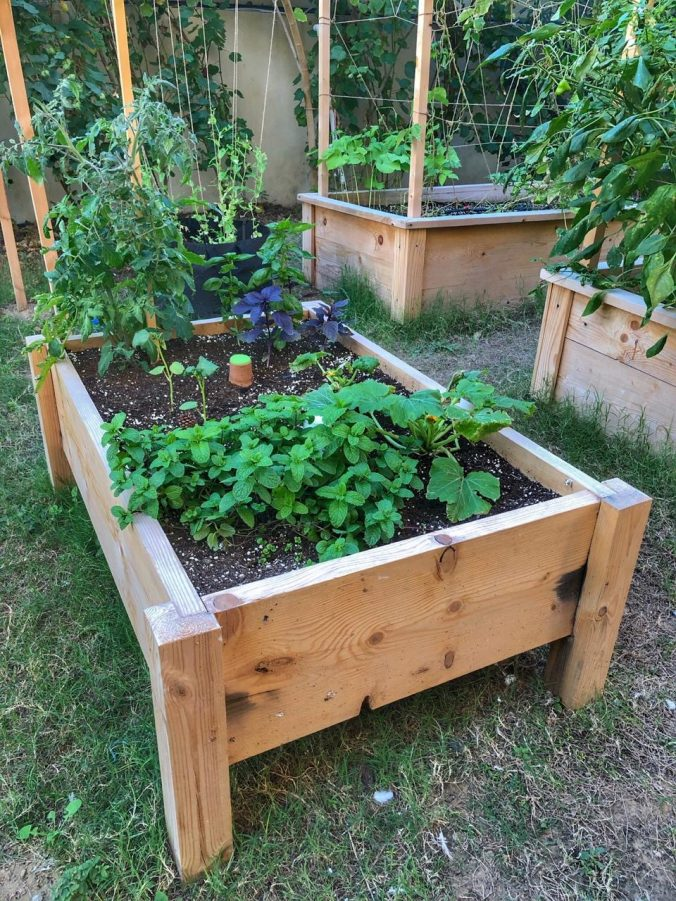 How To Grow Veg In Your Own Raised-Bed Garden - Home Club Me