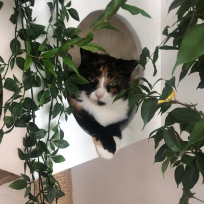 A cat sitting on top of a white flower on a plant