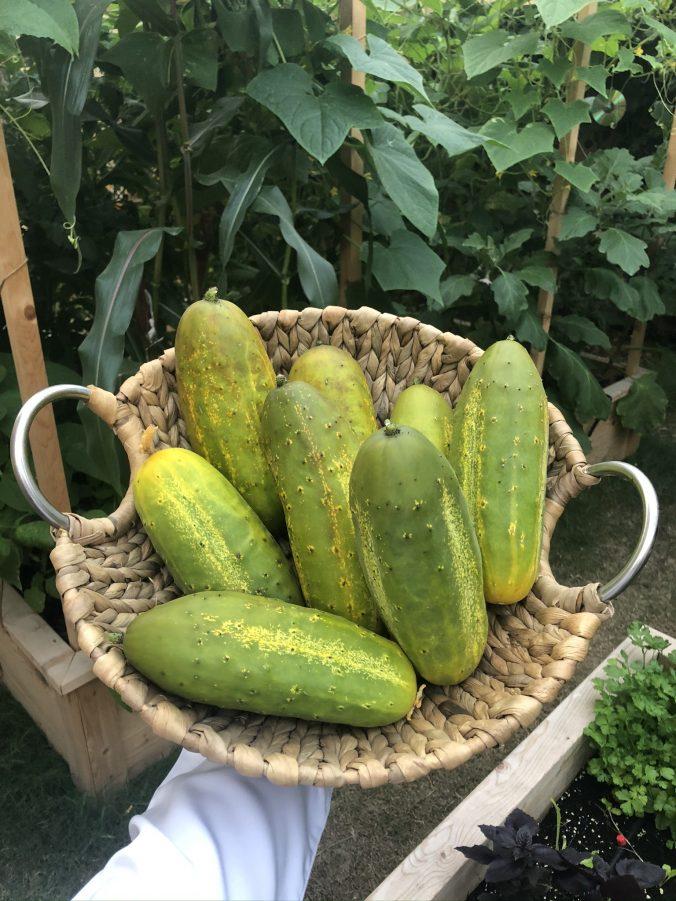 A cactus in a garden